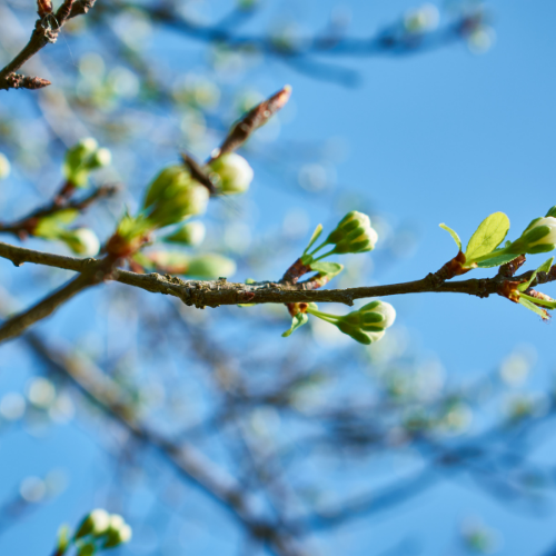 Happy Spring! Here are Five Reasons to Celebrate this Season!